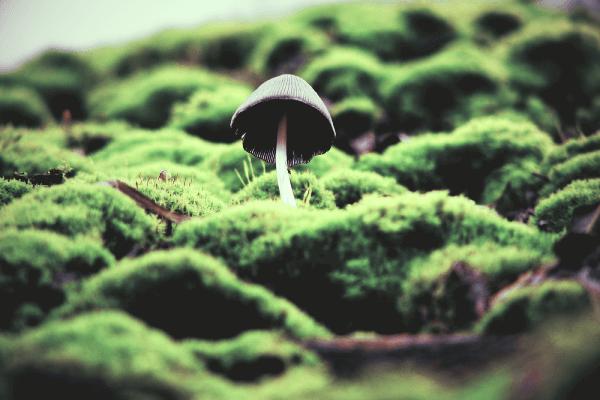 mushrooms [f0000](1)