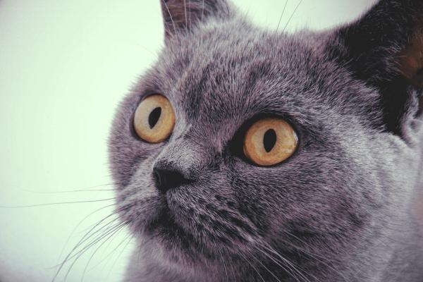 cat-shoked
